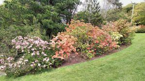 Botanic gRDEN 7