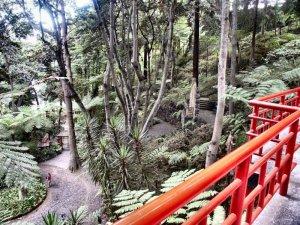 Tropical_garden_1